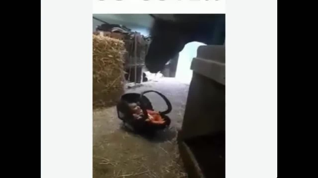 Horse Rocks Baby To Keep Him From Crying Again
