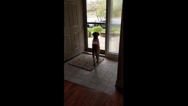 Dog has best reaction when her brothers come home for a visit