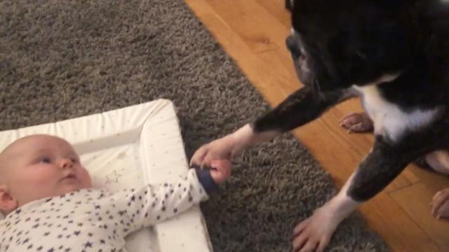 Mom captures adorable moment family dog refuses to let go of baby brother's tiny hand