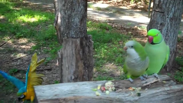 You'll squeal when you hear what this parrot said to her new best friend
