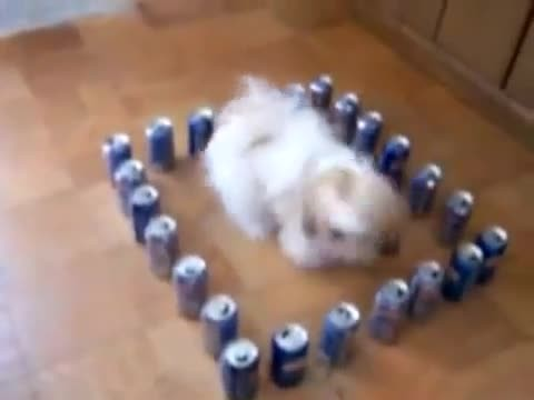 When he put Pepsi cans around his dog, I couldn't stop laughing