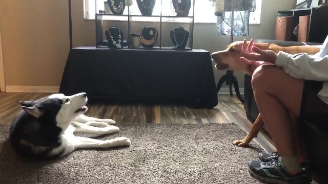 Dogs make up with a kiss after getting into a heated argument over nothing