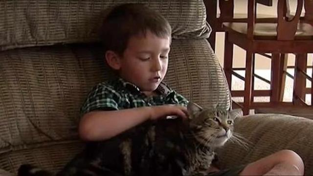 A family dog attacks their 4 year old, but their cat saves the day