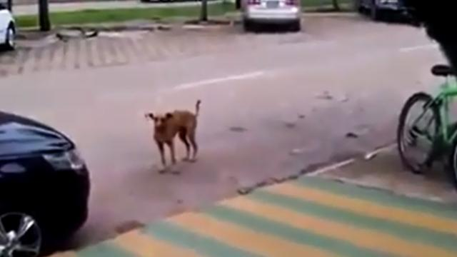 Dog walked up to a parked car, but when he hears the music playing ... I never expected this