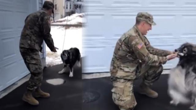 Dog barks at 'stranger' before recognizing him as his dad who's been away