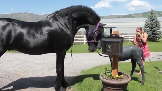 What happens when a horse meets a smaller version of itself?