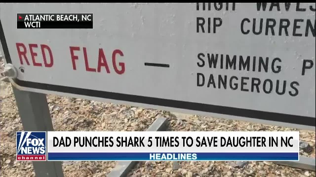 Girl loses 'one leg above the knee' in North Carolina shark attack, father punched fish 5 times: gra