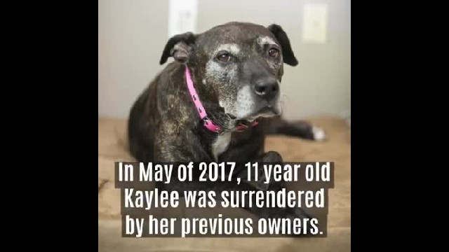 Family walks into shelter and adopts oldest dog there – one day, she lets them know it's time