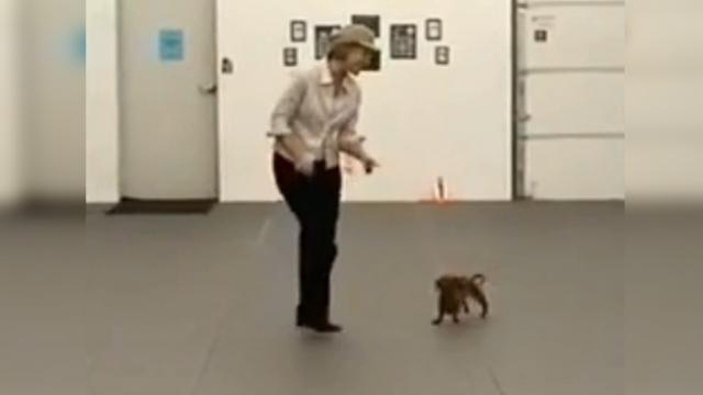 Woman dances to famous tune, but her dachshund steals the show when his song comes on