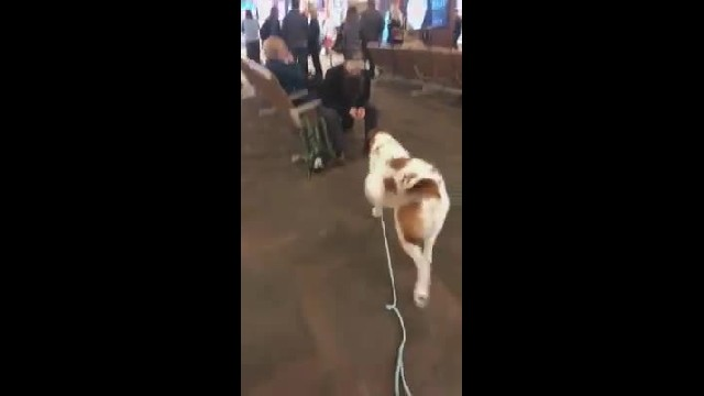 Dog doesn't recognize stranger at the airport until he smells a familiar scent on him