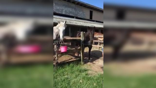 What a horseplay! This greedy stallion is hogging the water hose from the other horse!