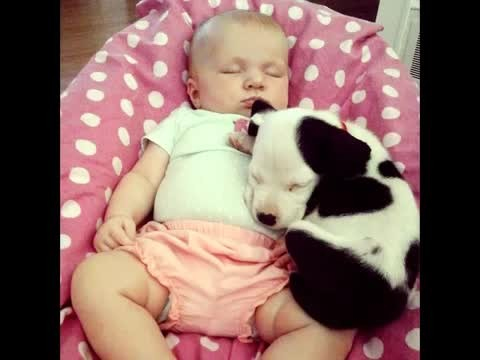 This video of a puppy and baby growing up together is worth a million views!