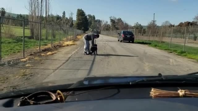 Man Caught Abandoning His Dog At The Roadside, But The Dog Had Other Ideas