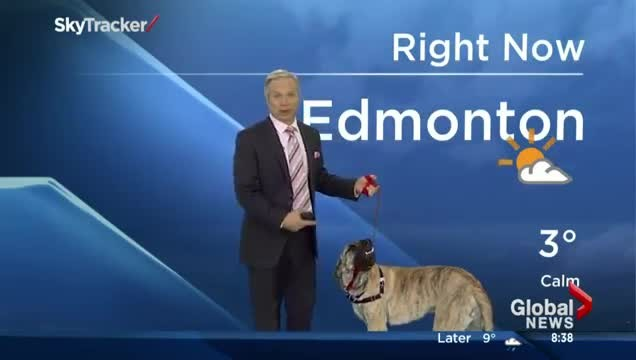 Weatherman holds adoption dog during forecast – hysterical result has viewers cracking up