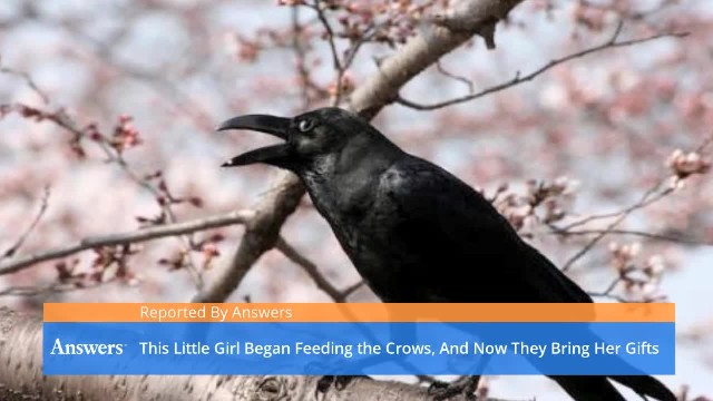 After Feeding Crows In Her Garden For Four Years, 8-Year Old Girl Receives Awesome Gifts From Them