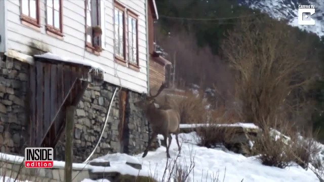 Woman leaves door open during storm, comes back to three wild deer huddled inside
