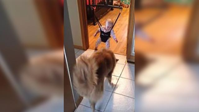 Caught on camera: Dog teaches baby how to jump!