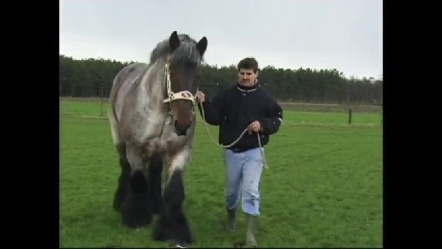 He took a huge horse onto the field, but when the horse starts moving… Incredible.