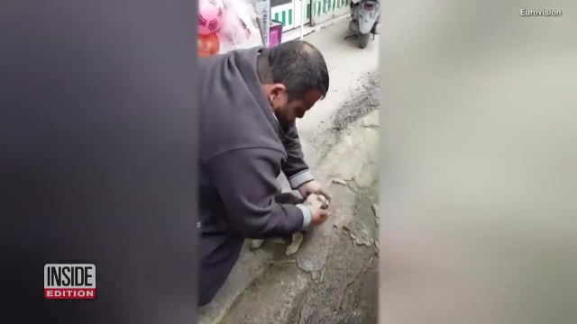 Man Sees Lifeless Stray Dog And Starts Performing CPR Until Dog Is Breathing Again