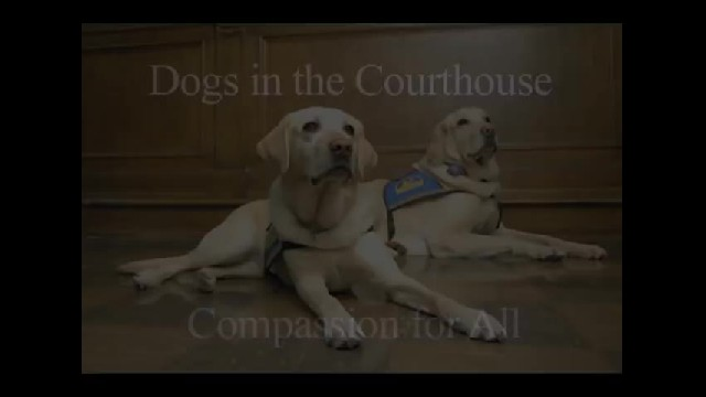 These Adorable Dogs Help Comfort Abuse Victims While Testifying Against Their Attacker