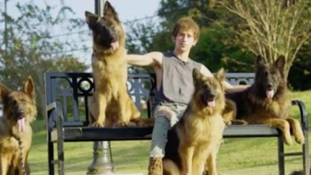 Meet the dog trainer who can walk an entire pack of German shepherds without leash