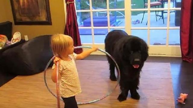 Tiny girl shows dog new hula hoop. Dog makes move that has everyone in laughter