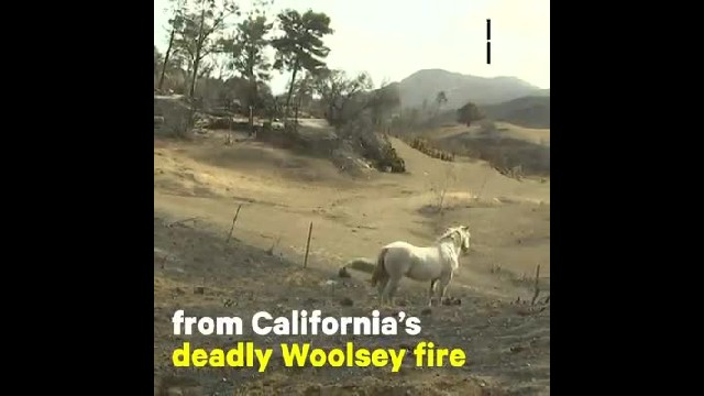 Hollywood stuntman risks his life to save 300 horses from California wildfires