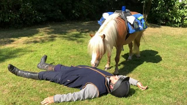 Man collapses right in front of his pony, how animal saves his life is going viral