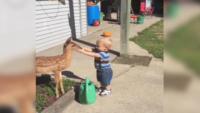 Wild baby deer comes out of the forest to play with an adorable baby boy
