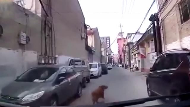 Clever dog leads paramedics through maze of alleyways to his collapsed owner