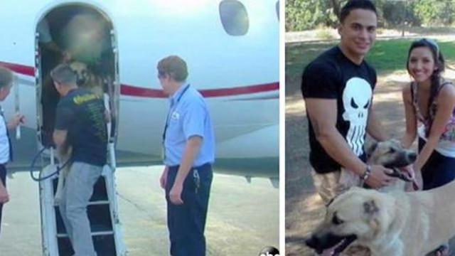 Marine was about to lose dogs because they can't fly, so heiress charters private jet for them