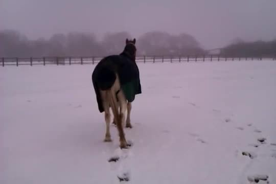 This Horse Loves the Snow. Now Watch the Dog Prove He Loves It Even More!
