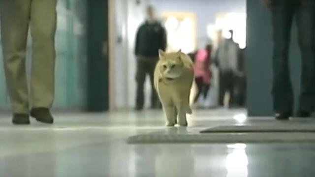 Cat shows up at 7:00 AM for class everyday, then students learn his motivation to keep coming