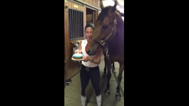 This Horse Blowing Out His Birthday Candles Will Leave You In Stitches!