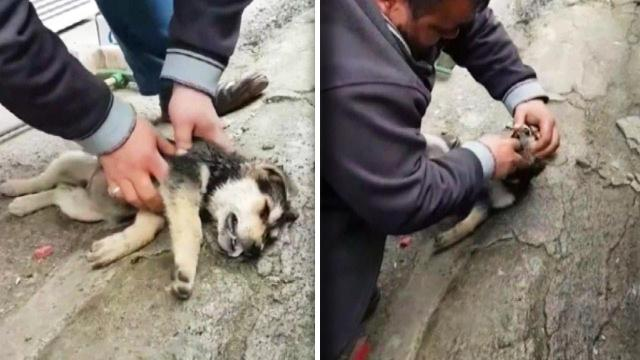 Good Samaritan Saves Puppy