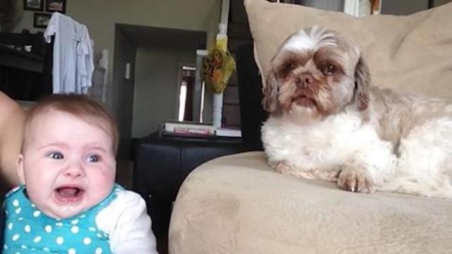 Baby starts arguing with dog. Pup's comeback has the internet in laughter