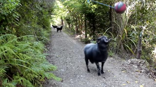 Man sets up tetherball on forest trail, moments later, a fierce