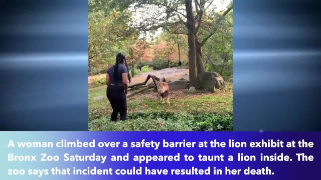 Woman climbs into lion exhibit at Bronx Zoo and starts dancing in viral video