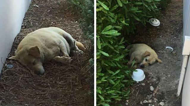 People find dog living in the dirt after his family moves away