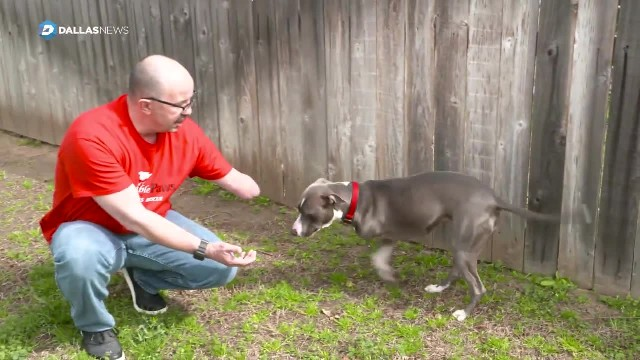 Dog Loses Leg After Being Shot & Left For Dead, Now She Has New Home with Man Missing An Arm