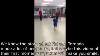 Boy with autism won't let anyone touch him - Watch the tearful moment he meets his service dog