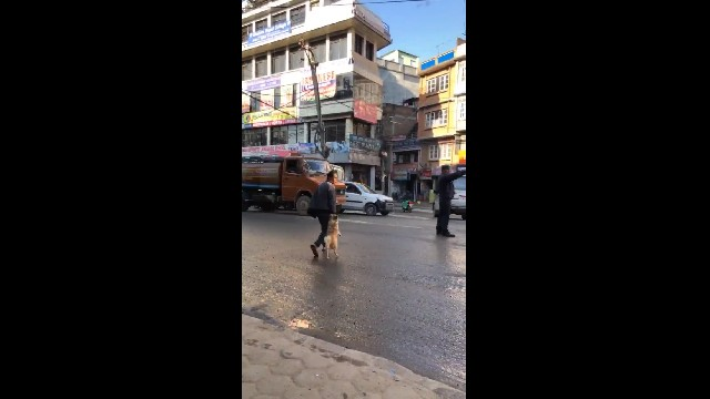 Perfect pup spotted taking his dad's hand to safely cross the street
