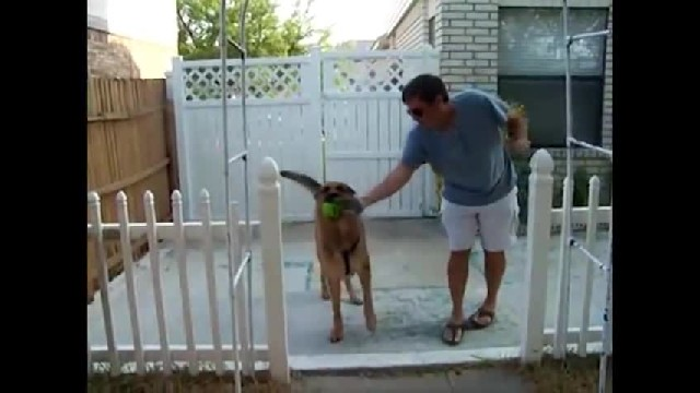 German Shepherd Can't Contain His Joy After Finally Reuniting With His Soldier Dad