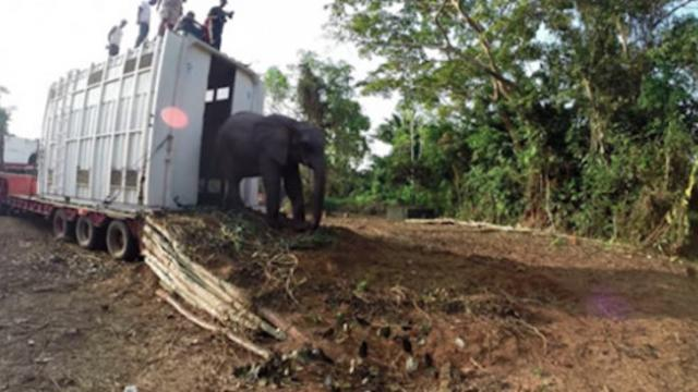Watch this video of elephants being relocated