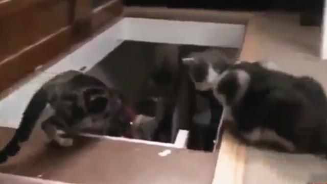 Mom tries teaching her pup to go down the steps, but watch the cat. LOL!