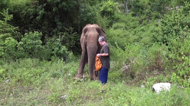 Abused 80-year-old elephant can't hold back her tears when man plays piano for her