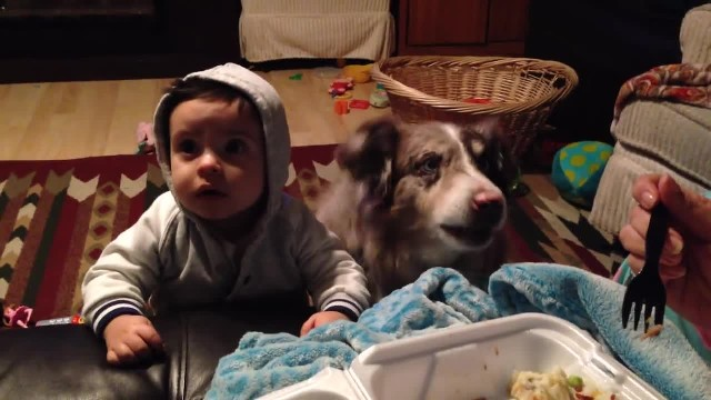 Mom offers food to her baby son if he says 'mama.' Later she burst into laughter when her dog opens