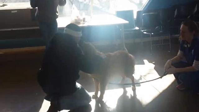Dog shares a heartwarming reunion with his family after 20 months
