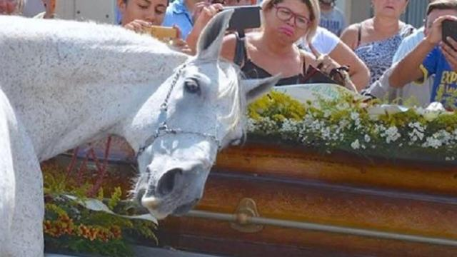 Grieving horse says touching goodbye to owner at funeral