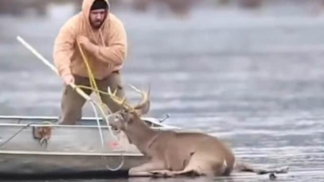 Guy rushes onto thin ice to rescue deer stranded on frozen lake – But then the ice begins to crack